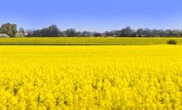 śródpolny kolor żółty Zdjęcie Royalty Free