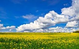 śródpolny kolor żółty Zdjęcie Stock