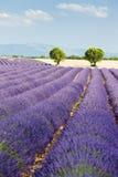 śródpolny lawendowy Provence Zdjęcie Royalty Free