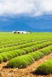 śródpolny lawendowy Provence Obraz Stock