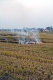 śródpolny ogień obrazy royalty free