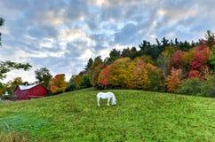 śródpolny pastwiskowy koń Zdjęcia Stock