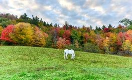 śródpolny pastwiskowy koń Fotografia Royalty Free