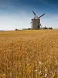 śródpolny pszeniczny wiatraczek obrazy royalty free