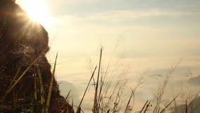 Śródpolny trawy chodzenie wiatrem na mountian i złotym świetle słonecznym w ranku zdjęcie wideo