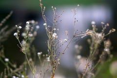 Śródpolny Wrzesień kwitnie w Radziejowice Polska zdjęcia royalty free