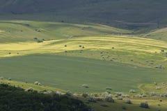 śródpolny zielony kolor żółty Zdjęcia Stock