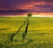 śródpolnych kwiatów krajobrazowy lato kolor żółty Obraz Royalty Free