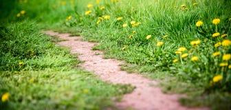 śródpolnych kwiatów krajobrazowy lato wschód słońca kolor żółty Obraz Stock