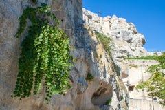 Śródziemnomorska kaparowa roślina na skale w kamieniach Matera lub sassi obrazy royalty free