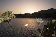 Śródziemnomorska pętaczka Obraz Royalty Free