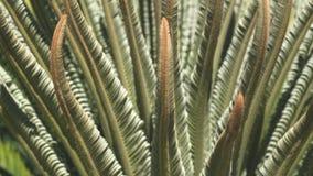 Śródziemnomorska roślina makro- Zdjęcia Stock