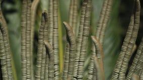 Śródziemnomorska roślina makro- Zdjęcia Royalty Free
