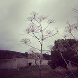Śródziemnomorski krajobraz Jesień Almeria Hiszpania obraz royalty free