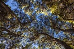 Śródziemnomorski las Obrazy Stock