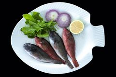 Śródziemnomorski parrotfish z rakieta liśćmi słuzyć na bielu talerzu obraz royalty free