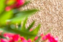 Śródziemnomorski szczegółu dom, ogród i Obrazy Stock