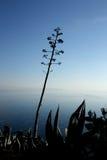 Śródziemnomorskie rośliny Zdjęcia Stock