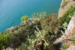 Śródziemnomorskie rośliny Obraz Royalty Free