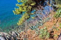 Śródziemnomorskie rośliny morzem Fotografia Stock