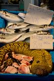 Śródziemnomorskiej mureny Romański węgorz, Muraena Helena przy fishmonger targowy stal obraz stock