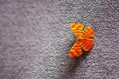 Średni maplet motyl Tajlandia tło Obrazy Stock