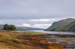 Średniogórza kształtują teren, Szkocja Fotografia Stock