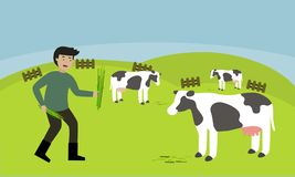 Średniorolna żywieniowa trawa dla krów Zdjęcie Royalty Free