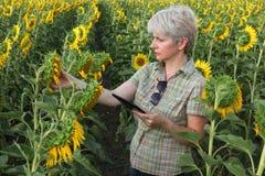 Średniorolna egzamininuje słonecznikowa roślina Zdjęcie Stock