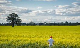 Średniorolna pozycja przy krawędzią żółty canola pole w lato czasie Fotografia Royalty Free