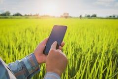 średniorolna używa wisząca ozdoba sprawdza raport rolnictwo obrazy royalty free