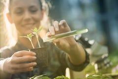 Średniorolne kobiety dolewania substancje chemiczne w rozsadzie zdjęcia royalty free
