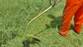 Średniorolnego arymażu rżnięta trawa w ogródzie zdjęcie wideo