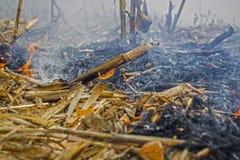 Średniorolnego podpalenia postharvest resztki które wynikali w zabijać mikroorganizmy, zarówno jak i mali zwierzęta i dym, kukuru zdjęcia stock