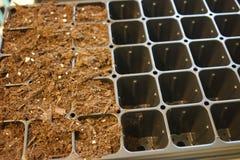 Średniorolni zaczyna pomidorów ziarna w szklarni obraz stock