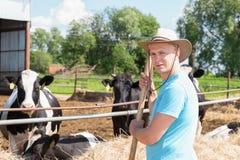 Średniorolny działanie na gospodarstwie rolnym z nabiał krowami Zdjęcie Stock