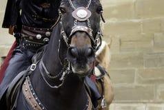 Średniowieczny ubierający koń fotografia royalty free