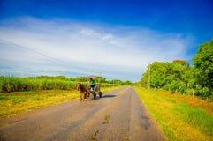 ŚRODKOWA droga KUBA, WRZESIEŃ, - 06, 2015: Koń i Fotografia Royalty Free