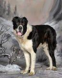 Środkowy Azjatycki Pasterski pies Obrazy Royalty Free