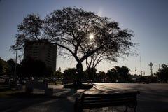 środkowy drzewo znacząco kwadrat w mieście słońce «Quilpue « zdjęcie royalty free