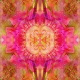 ŚRODKOWY kwiatu mandala Z ABSTRAKCJONISTYCZNYMI płatkami W menchiach, FRACTAL wizerunek W centrum Rocznika wizerunek royalty ilustracja