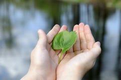 środowiska dziewczyny mienia liść naturalny Zdjęcie Stock