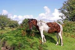 środowiska dziki koński naturalny Fotografia Stock