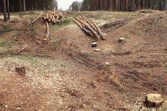 Środowiska, natury i wylesienia las, - powalać drzewa obrazy royalty free
