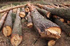 Środowiska, natury i wylesienia las, - powalać drzewa fotografia stock