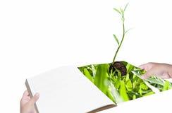 Środowiska pojęcia ręka z książkową i nową życie rośliną zdjęcia stock