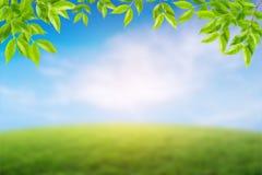 środowiska pojęcie, słoneczny dzień na łące Zdjęcie Royalty Free