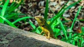 Środowiska zwierzę fotografia stock