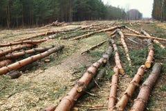 Środowisko, natura, wylesienie las - powalać drzewa zdjęcia royalty free