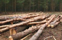 Środowisko, natura, wylesienie las - powalać drzewa zdjęcie stock